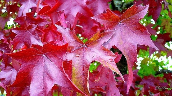 autumn-leaves-wallpaper-collection-12