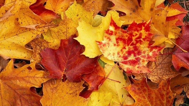 autumn-leaves-wallpaper-collection-16