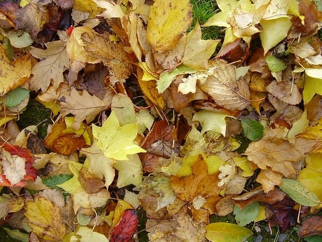 autumn-leaves-wallpaper-collection-17