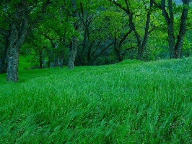 grasslands-wallpaper-collection-01