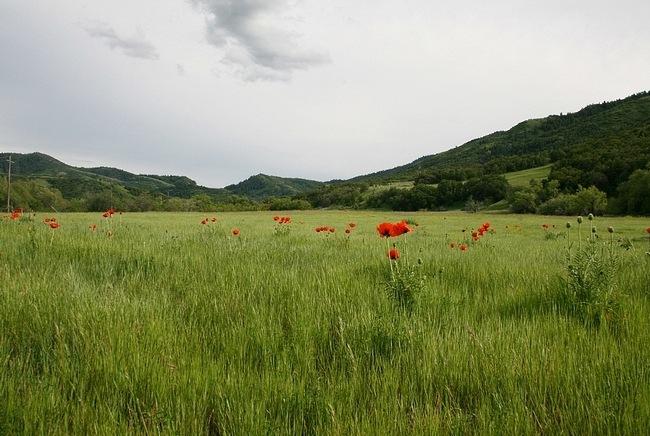 grasslands-wallpaper-collection-06