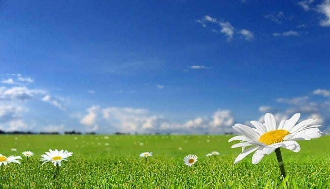 grasslands-wallpaper-collection-12