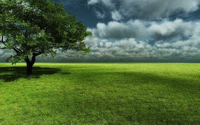 grasslands-wallpaper-collection-13