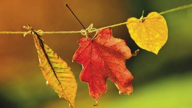 autumn-leaves-wallpaper-collection-03