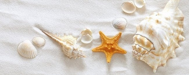 seashells-wallpaper-collection-00