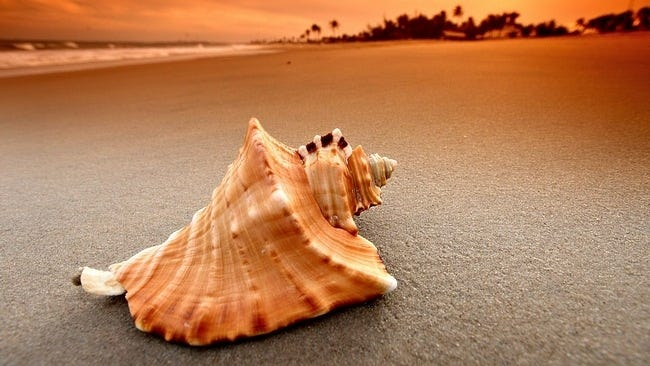 seashells-wallpaper-collection-01