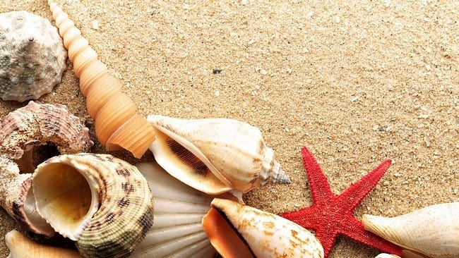 seashells-wallpaper-collection-03