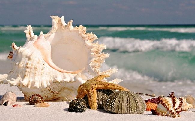 seashells-wallpaper-collection-04