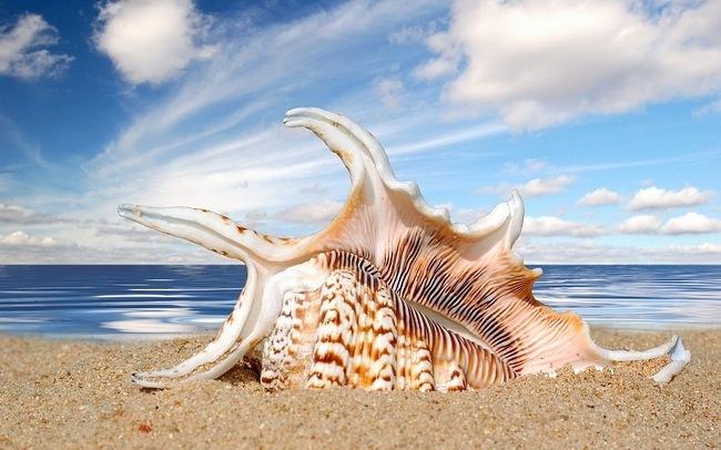 seashells-wallpaper-collection-05