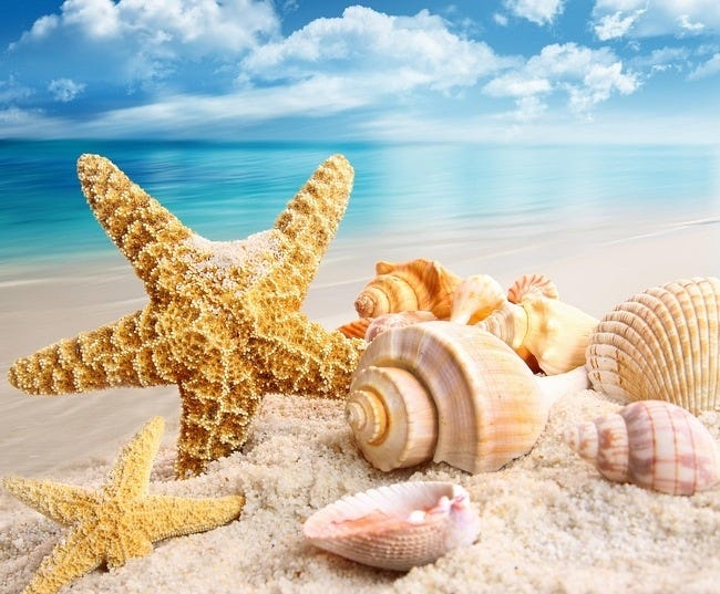 seashells-wallpaper-collection-06