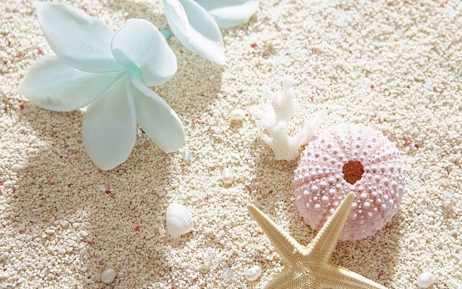 seashells-wallpaper-collection-08