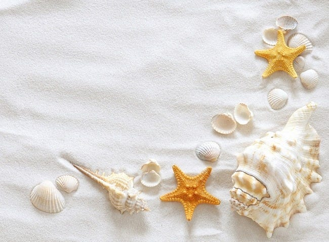 seashells-wallpaper-collection-09