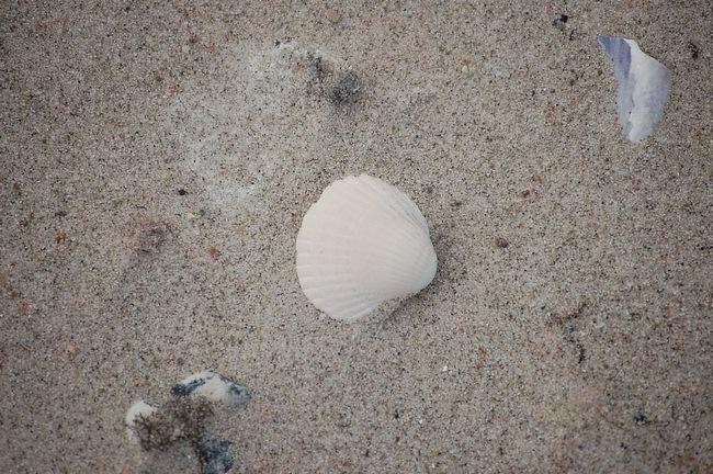 seashells-wallpaper-collection-11