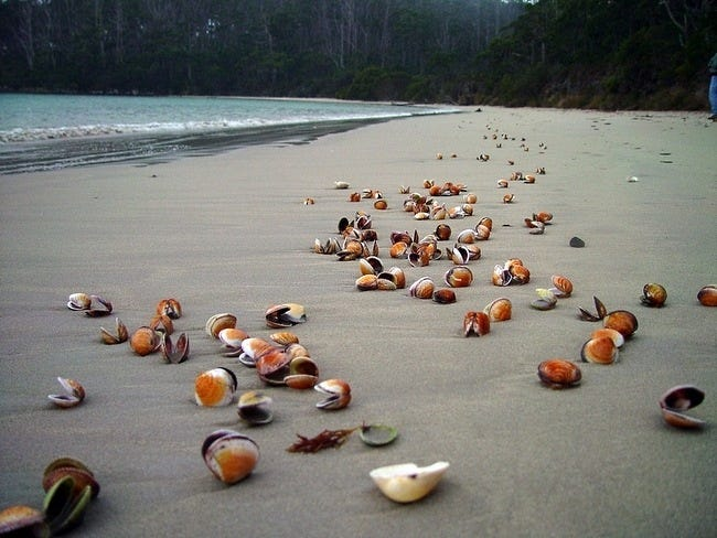 seashells-wallpaper-collection-12