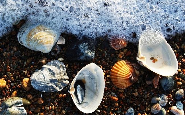 seashells-wallpaper-collection-13