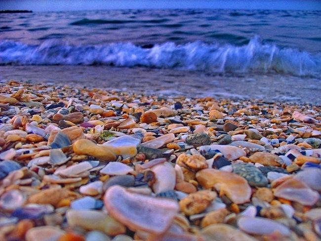 seashells-wallpaper-collection-14