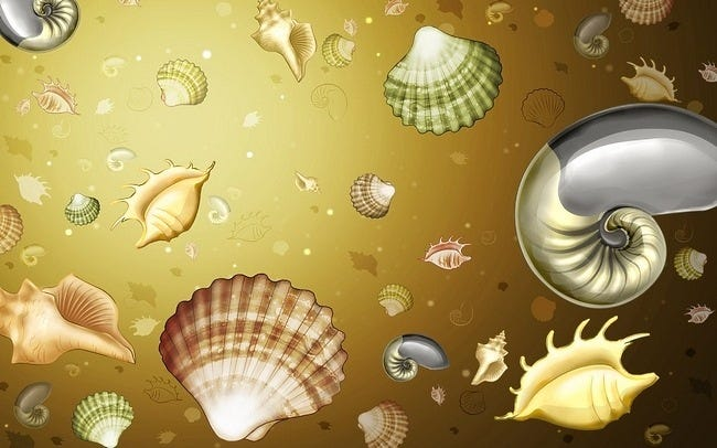 seashells-wallpaper-collection-15