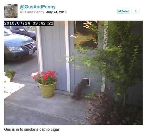 Tweeting-Cat-Door