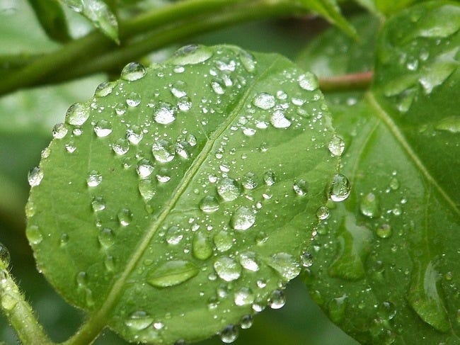 rainy-days-wallpaper-collection-series-two-06