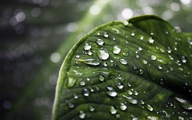 rainy-days-wallpaper-collection-series-two-09