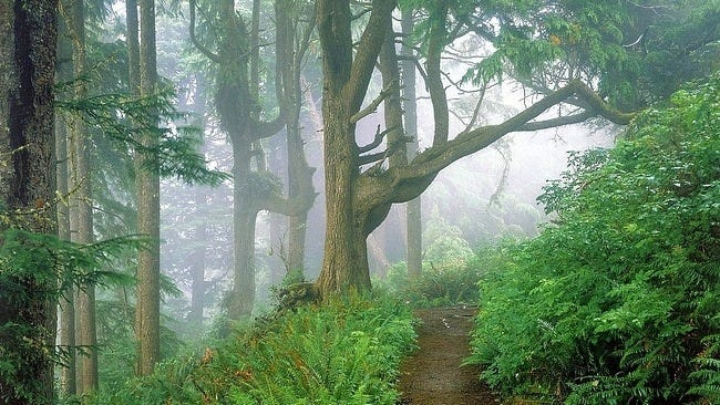 foggy-mornings-wallpaper-collection-01