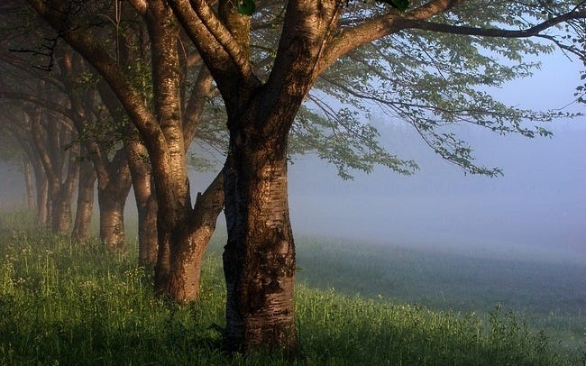 foggy-mornings-wallpaper-collection-03