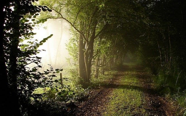 foggy-mornings-wallpaper-collection-04
