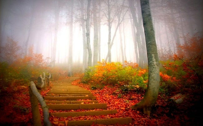 foggy-mornings-wallpaper-collection-08