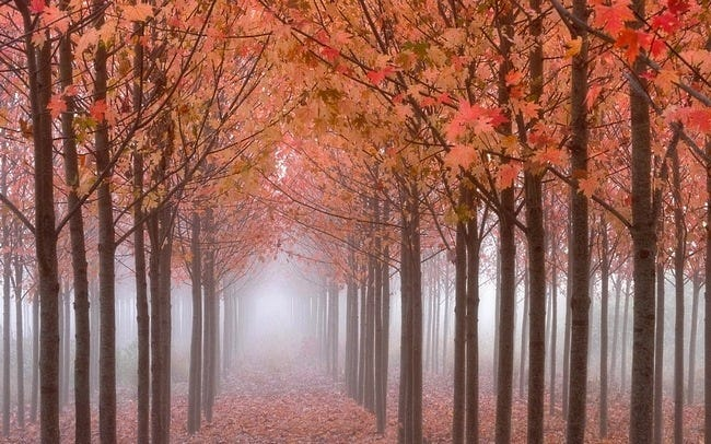 foggy-mornings-wallpaper-collection-09
