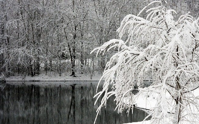 winter-2011-wallpaper-collection-07