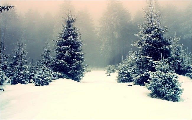 winter-2011-wallpaper-collection-10