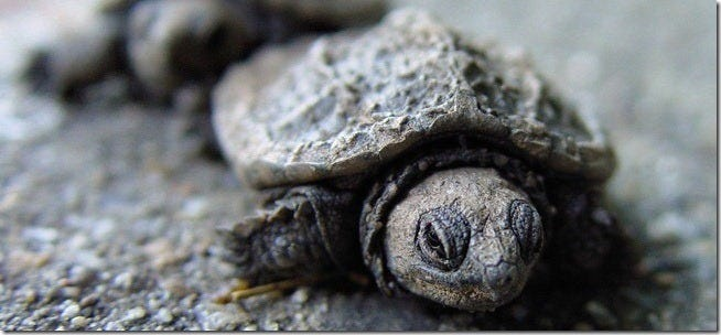 tortoise-48185613_8cce892353_b