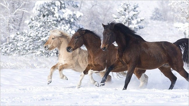 horses-wallpaper-collection-series-two-13