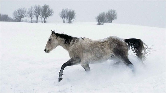 horses-wallpaper-collection-series-two-14
