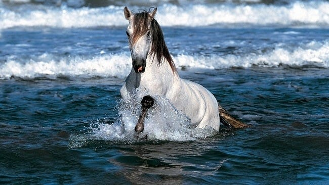 horses-wallpaper-collection-series-two-15