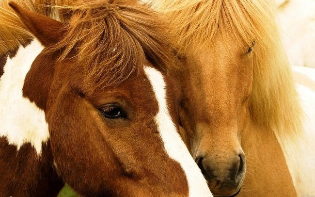 horses-wallpaper-collection-series-two-01