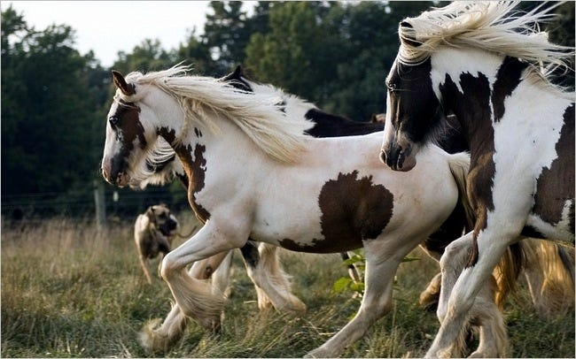 horses-wallpaper-collection-series-two-07