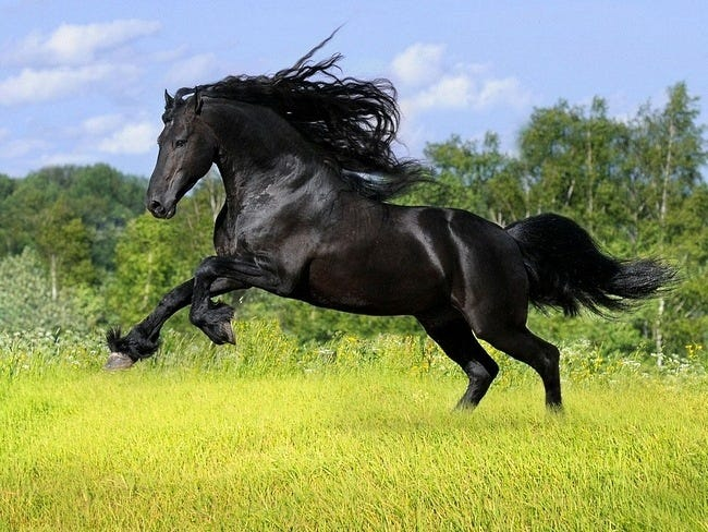 horses-wallpaper-collection-series-two-05
