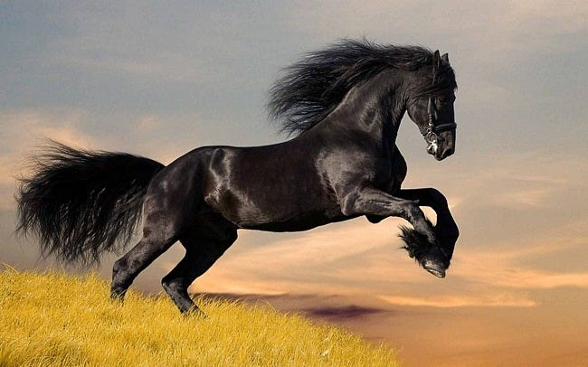 horses-wallpaper-collection-series-two-04