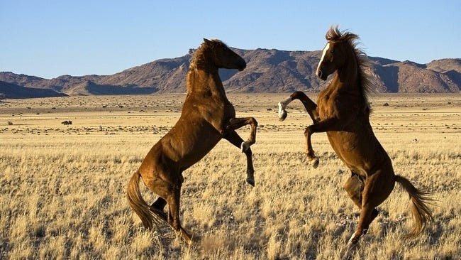 horses-wallpaper-collection-series-two-09