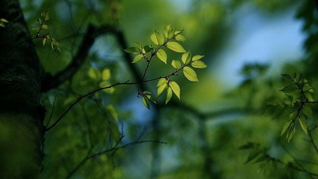 spring-leaves-wallpaper-collection-11