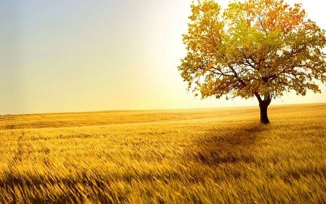 rural-scenes-wallpaper-collection-series-two-12