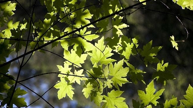 spring-leaves-wallpaper-collection-04