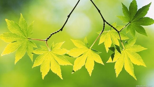 spring-leaves-wallpaper-collection-05