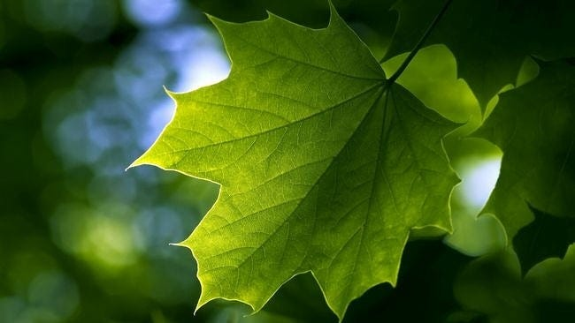 spring-leaves-wallpaper-collection-06