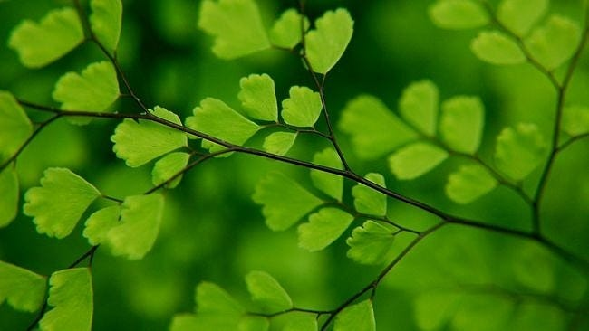 spring-leaves-wallpaper-collection-10