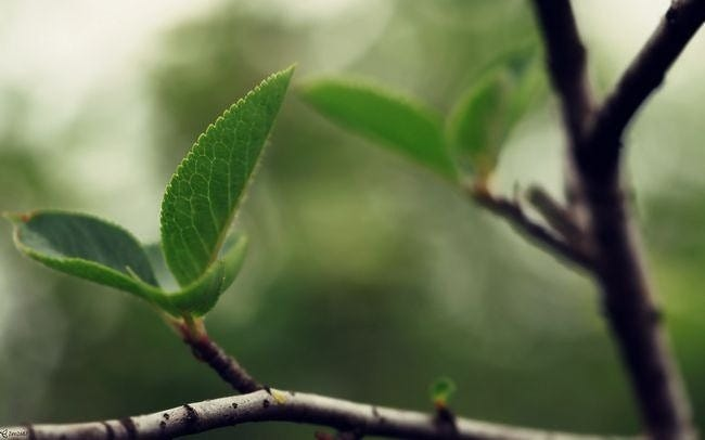 spring-leaves-wallpaper-collection-15