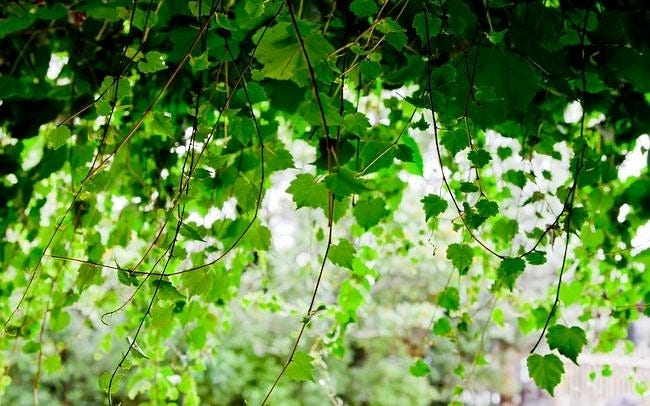 spring-leaves-wallpaper-collection-18