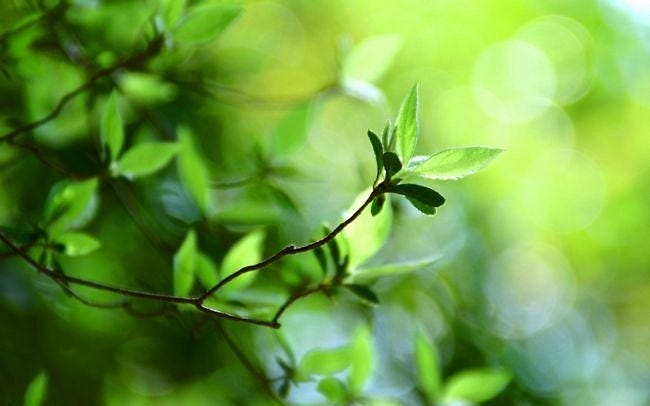spring-leaves-wallpaper-collection-13