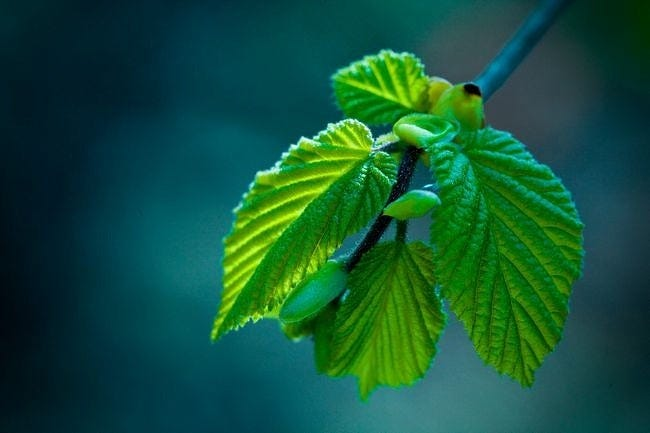 spring-leaves-wallpaper-collection-14